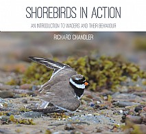 Shorebirds in Action