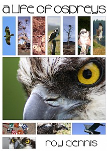 A Life of Ospreys